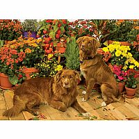 Duck Tollers 1000pc Puzzle