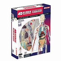 4D Transparent Human Body